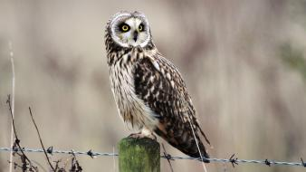 Nature birds wildlife yellow eyes owls barbed wire wallpaper