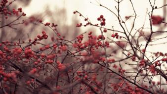 Nature depth of field berries branches wallpaper