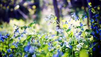 Nature flowers leaves bokeh blue wallpaper