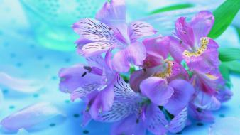 Nature flowers pink purple widescreen wallpaper