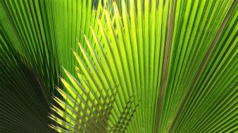 Nature palm leaves wallpaper