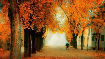 Nature trees forest path autumn wallpaper