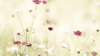 Nature wildflowers wallpaper