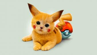 Pokemon cats pikachu google pokeball wallpaper