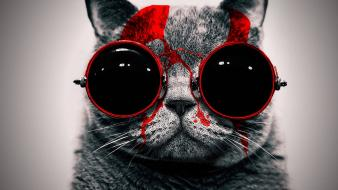 Red cats animals glasses funny wallpaper