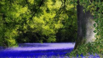 Trees flowers united kingdom blue bluebells wallpaper