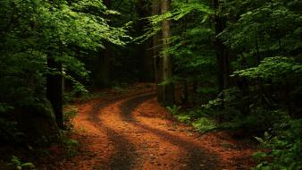 Trees forest path roads wallpaper