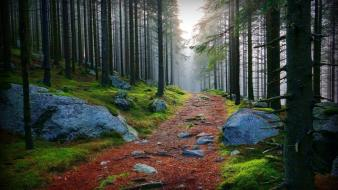 Trees wood path stones moss branches wallpaper