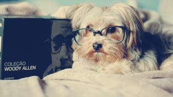 Animals beds dogs glasses books woody allen pets wallpaper