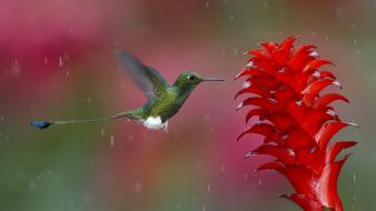 Animals colibri birds wallpaper