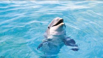 Animals dolphins wallpaper