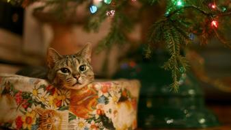 Cats christmas pets wallpaper