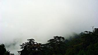 Clouds landscapes nature trees taiwan foggy skies wallpaper