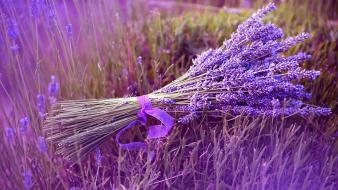 Flowers grass purple ribbons lavender bouquet wallpaper