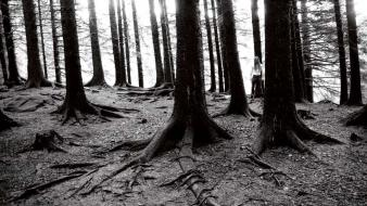 Forest monochrome black metal peter beste taake wallpaper
