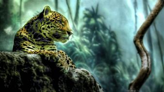 Jungle animals rocks leopards wallpaper