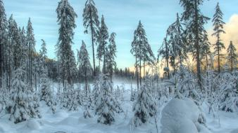 Landscapes nature snow trees forest wallpaper