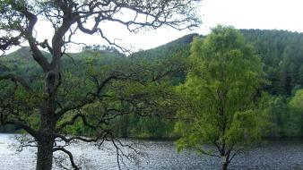 Landscapes nature trees forest hills scotland lakes wallpaper