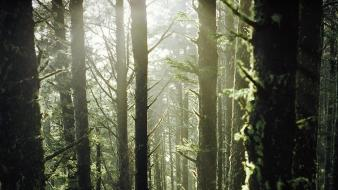Landscapes trees forest sunlight moss wallpaper
