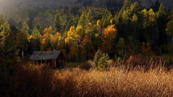 Nature trees forest country cabin wallpaper