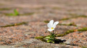 Pavement white flowers wallpaper