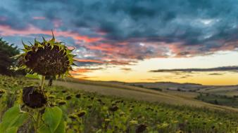 Sunset nature country romania parks sunflowers skies wallpaper