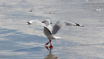 White flying birds waves animals seagulls sea wallpaper