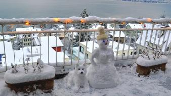 Winter dogs snowmen Wallpaper