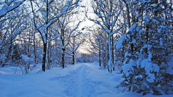 Winter snow trees new year 2013 now wallpaper