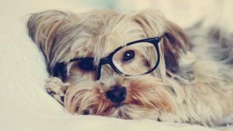 Animals dogs glasses puppies hipster wallpaper