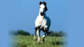 Animals horses blue skies wallpaper