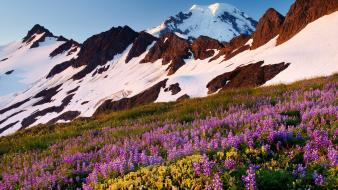 Baker washington mount lupine wilderness wallpaper