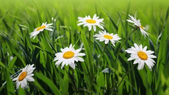 Flowers grass flora wallpaper