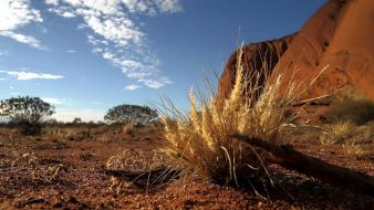 Landscapes nature desert macro ground wallpaper