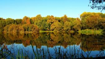 Landscapes nature trees forest lakes reflections wallpaper
