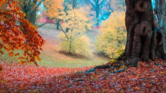 Landscapes trees forest leaves autumn Wallpaper