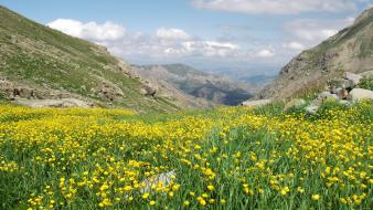 Mountains clouds nature flowers yellow scene wallpaper