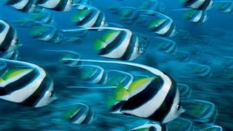 National geographic underwater fishes Wallpaper