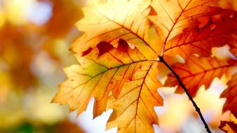 Nature autumn (season) orange leaves wallpaper