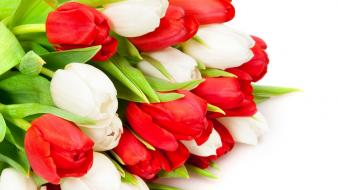 Red white flowers tulips wallpaper