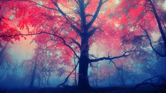 Trees red Wallpaper