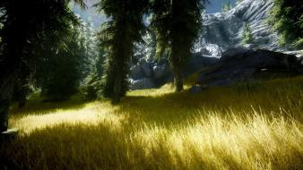 Video games trees the elder scrolls v: skyrim wallpaper