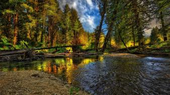 Water landscapes nature trees forest logs rivers Wallpaper