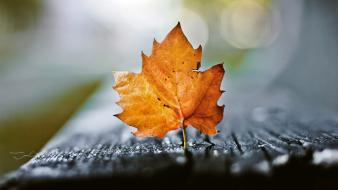 Water nature leaves bench macro autumn wallpaper
