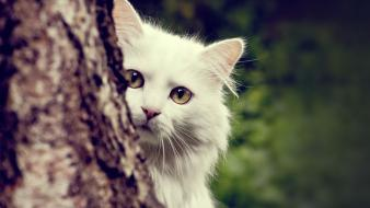 Animals cats trees white wallpaper