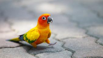 Birds parrots cobblestones wallpaper