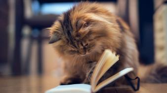 Cats animals reading books kittens Wallpaper