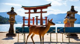 Deer asian architecture blurred background itsukushima shrine wallpaper