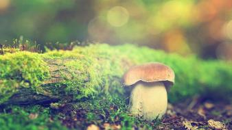 Forest mushrooms depth of field wallpaper