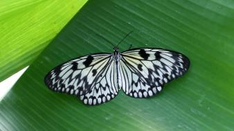Insects leaves butterflies wallpaper